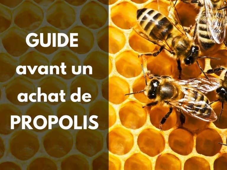 Achat propolis bio conseil