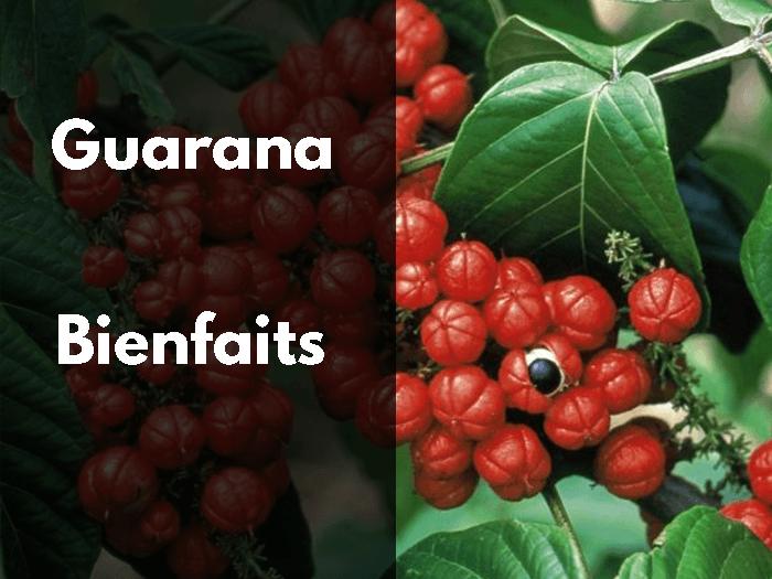 guarana, bienfaits, vertus, propriétés, stimulant, excitant, caféine, guaranine, graine