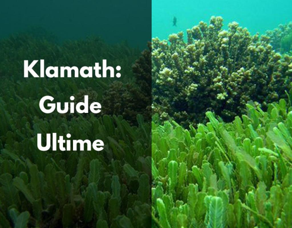 Klamath - Tout ce qu'il faut savoir (bienfaits, posologie)