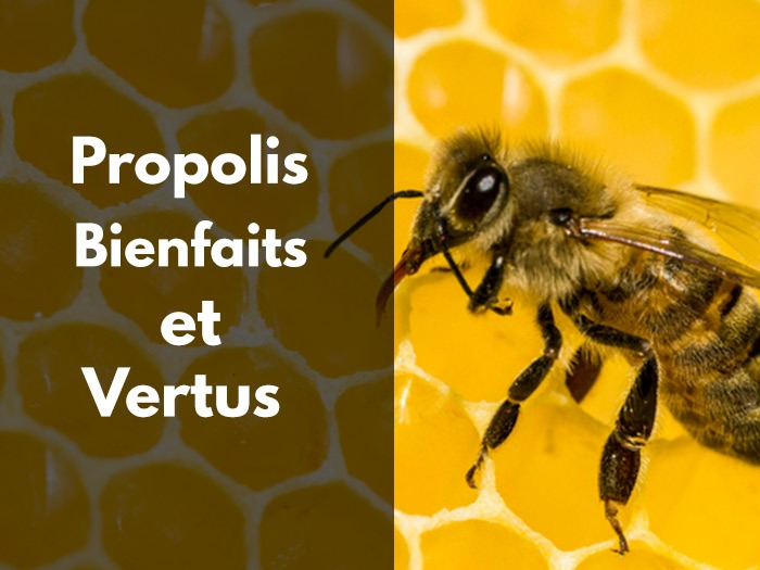bienfaits, vertus, propolis, herpes, allergie, cancer, naturelle, pure, brute, miel