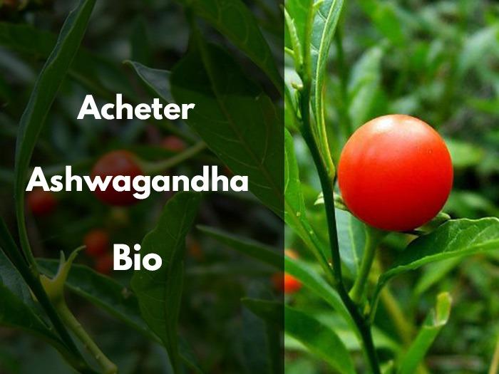 Ashwagandha, posologie, herboristerie, magasin bio, matin ou soir, dosage, prix, qualité, poudre gratuite