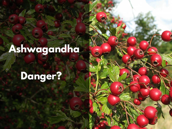 ashwagandha, danger, effet secondaire