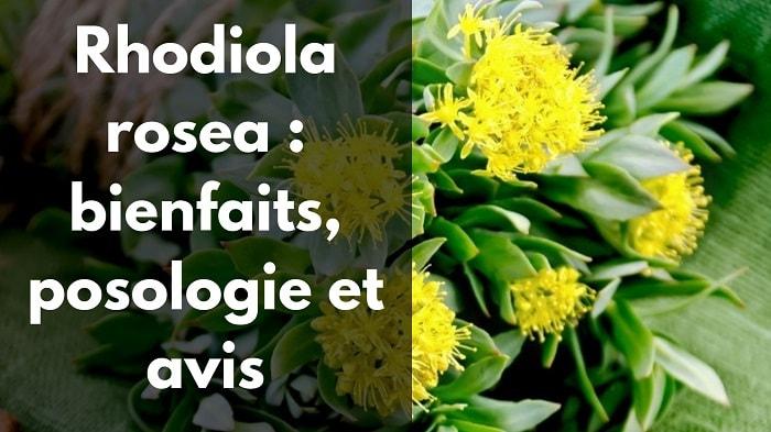 Rhodiola bienfaits, usage, avis