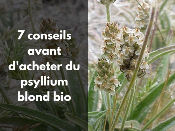 Où acheter du psyllium blond bio de qualité ?