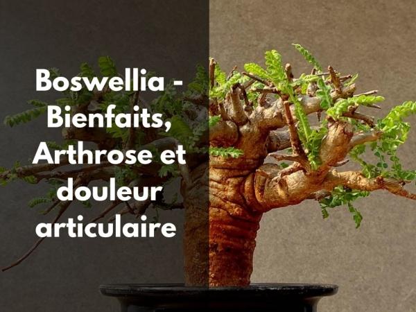 Quels sont les effets du boswellia contre l'arthrose ?
