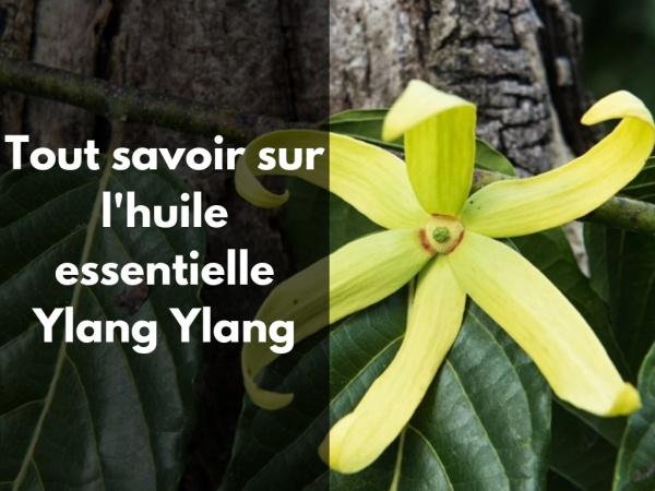 Quels sont les bienfaits de l'huile essentielle Ylang Ylang ?