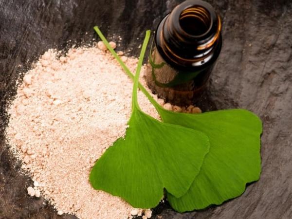 Quelles sont les utilisations les plus bénéfiques du ginkgo biloba ?