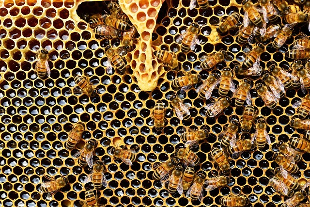 miel propolis gelée royale