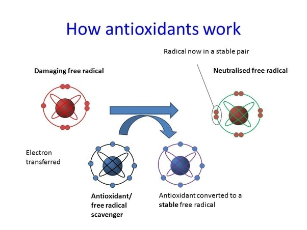 spiruline anti-oxydant