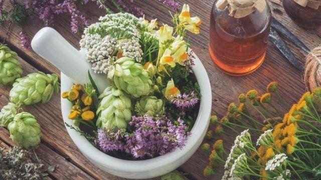Plantes médicinales liste : quelles sont les plus efficaces ?