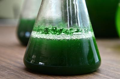 spiruline liquide